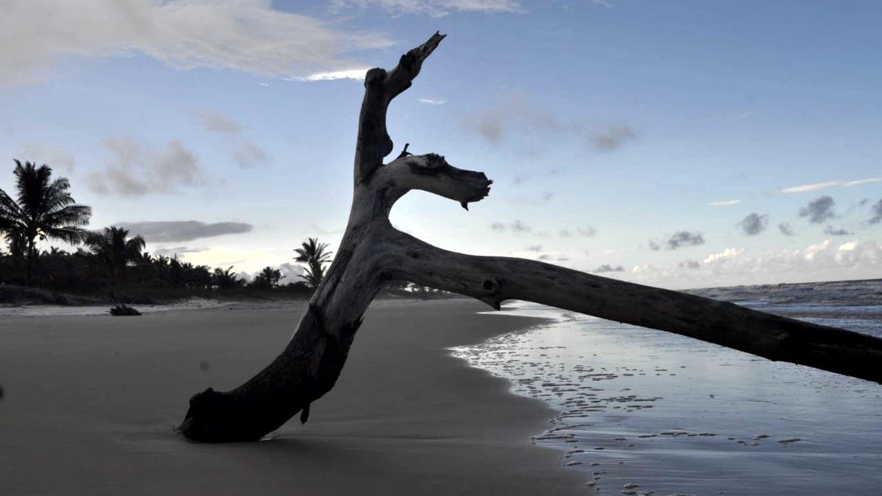 relax-bambusada-3